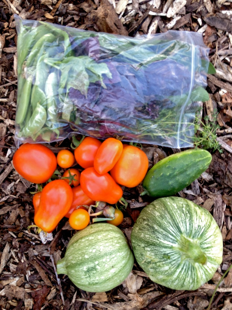 Image looking down on a plastic bag filled with snap peas and basil, and next to is a small pile of tomatoes, two round zucchini, and a cucumber