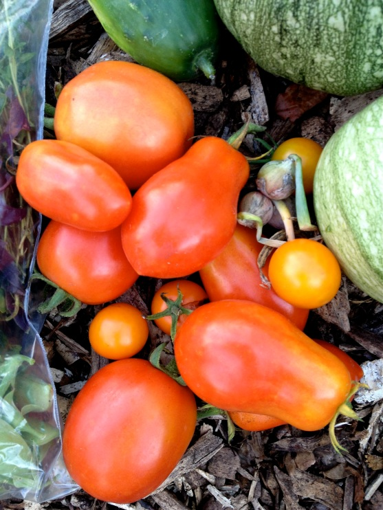 Close up image of a pile of red and orange tomatoes