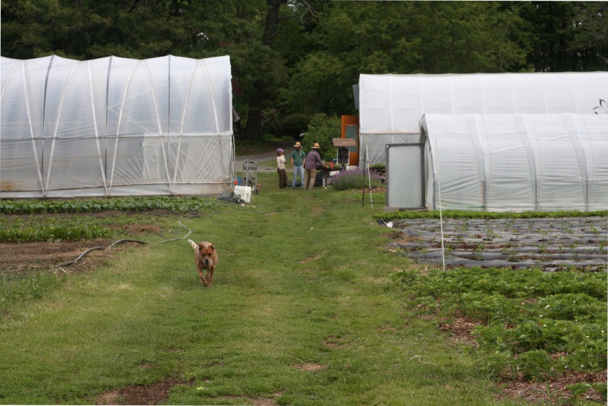 Looking down the main path toward the greenhouses